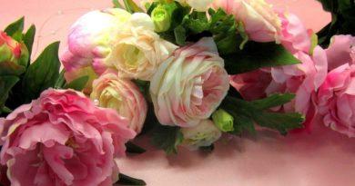 розы, цветы, аромат