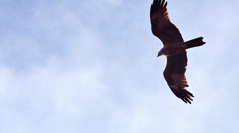 Полет орла. Варкала. Индия