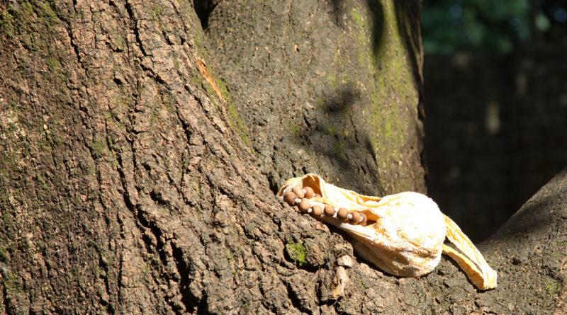 чётки, джапа, дерево,