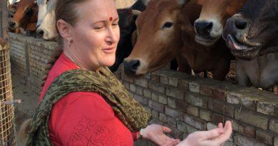 Сатьябхама, Рузова, коровы
