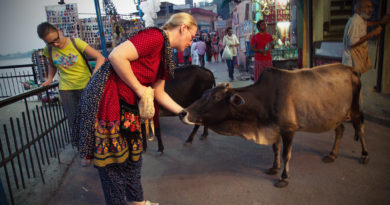 Корова в Ришикеше. Индия