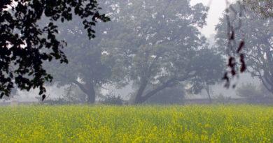 Утро во Вриндаване. Индия