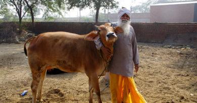 Бриджабаси и его любимая корова. Вриндаван. Индия