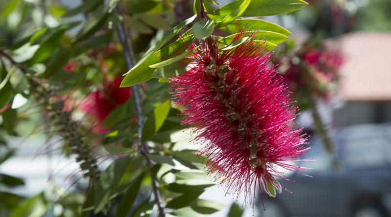 Цветы и природа Кипра