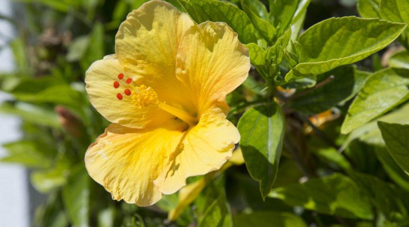 Природа Кипра. Цветы